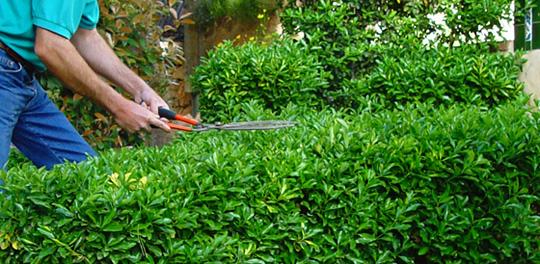 Los cuidados de Jardineria en verano